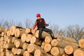 picture of lumber  - Young lumber engineer sitting with laptop on cut trunks - JPG