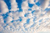 White Fluffy Cumulus Clouds On A Blue Sky poster