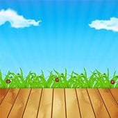 image of ladybug  - Background with green grass - JPG