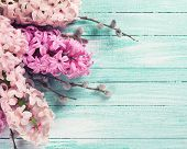 pic of willow  - Background with fresh pink hyacinths and willow on turquoise painted wooden planks - JPG