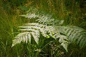 pic of fern  - ferns in a shaft of bright sunlight - JPG
