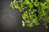 image of oregano  - oregano plant on slate background - JPG
