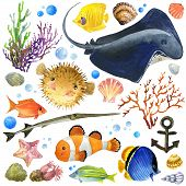 foto of shell-fishes  - exotic Fish - JPG