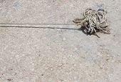 stock photo of dock  - Boat Rope tied to the dock  - JPG