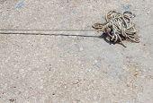 foto of roping  - Boat Rope tied to the dock  - JPG