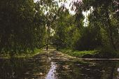 foto of willow  - Shady river with willows on the banks - JPG