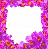 stock photo of debonair  - Frame of Beautiful Pink Orchids on white background - JPG