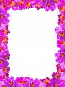 picture of debonair  - Frame of Beautiful Pink Orchids on white background - JPG