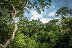 picture of rainforest  - Amazon Rainforest - JPG