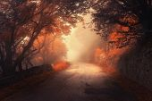 Mystical Autumn Red Forest With Road In Fog poster