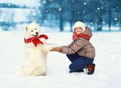 Christmas Happy Teenager Boy Playing With White Samoyed Dog On Snow In Winter Day, Cheerful Dog Give poster