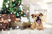 Cute puppy lying on carpet near Christmas gifts against blurred cozy interior background. Snowy effe poster