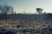 Scorched Bushes And Trees After Fire In Croatia poster