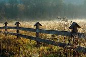 Morning Autumn Meadow. Moody Landscape With Yellow Grass Field And Trees. Morning Mist. Landscape Wi poster