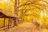 Beautiful Bright Autumn Background. Yellow Autumn Trees In Enchanting Autumn Forest. Autumn Leaves F poster