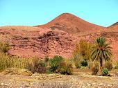 Постер, плакат: Гора и пальмы в южном Марокко