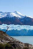 Постер, плакат: Одинокое дерево стоя на озеро и ледник