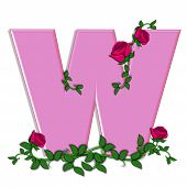 picture of climbing roses  - The letter W in the alphabet set Blushing Roses is soft pink - JPG