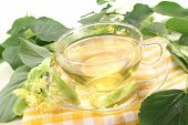 foto of lime-blossom  - hot fresh lime blossom tea on a bright background - JPG