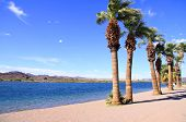Row of palm trees by lake Havasu
