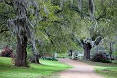 stock photo of bayou  - Lush green scene - JPG