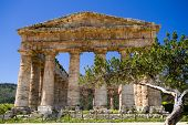 foto of sicily  - Ancient Greek Temple of Segesta Sicily Italy - JPG