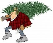 picture of cold-shoulder  - This illustration depicts a man bundled up against the cold and carrying a Christmas tree over his shoulder - JPG