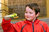 foto of tropical birds  - Happy boy holding and feeding parakeet bird