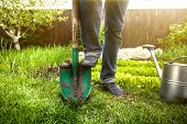 image of shovel  - Closeup photo of man holding foot on shovel at garden at sunny day - JPG