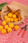stock photo of loquat  - Sack with freshly picked loquats a springtime fruit - JPG