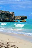 image of bottom  - Topical Palms at Bottom Bay , Barbados, Caribbean