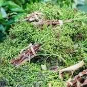 stock photo of siamese  - Siamese neem tree in local market - JPG