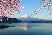 pic of mount fuji  - Mount Fuji with Cherry Blossom view from Lake Kawaguchiko Japan - JPG