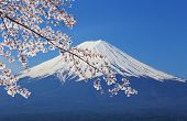 picture of mount fuji  - peak of Mount Fuji with Cherry Blossom view from Lake Kawaguchiko Japan - JPG