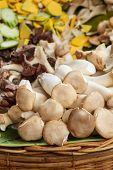 stock photo of trumpet  - Pleurotus eryngii mushroom  - JPG