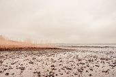 pic of tide  - Seaweed on a low tide beach at autumn