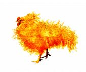 picture of roosters  - flame rooster isolated on white background - JPG