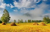 picture of hayfield  - Landscape with hayfield - JPG