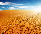 stock photo of sahara desert  - Footprints on sand dune - JPG