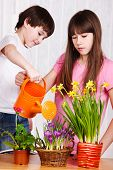 stock photo of pot plant  - Two cute kids watering flowers - JPG