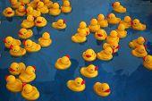 foto of dick  - rubber ducky - JPG