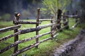 picture of log fence  - wooden fence green meadow spring road rural - JPG
