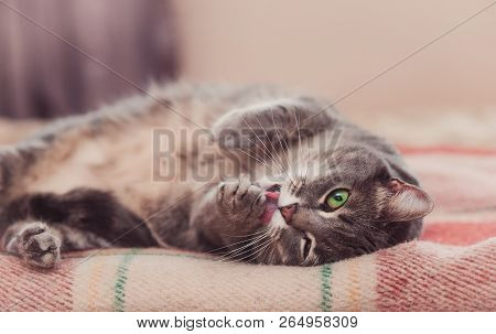 poster of Funny Resting Cat In The Day, Sleepy Cat, Young Cat In Bed, Half Sleepy Cat With Open Eyes
