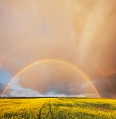 stock photo of gaul  - Rainbow in summer field - JPG