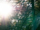 Sun Flares During Bare Branches Of Trees. Forest With Sunflares. Huggie, Travel, Holiday Concept. Co poster