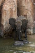 image of wallow  - A Mother elephant attending to its calf who is wallowing in the water to cool down