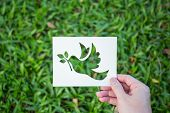 Cut Paper With The Logo Of Bird ( Pigeon, Dove ) Over Green Grass. Peace Sign And Symbol Background  poster