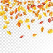 Oak, Maple, Wild Ash Rowan Leaves Vector, Autumn Foliage On Transparent Background. Red Orange Yello poster