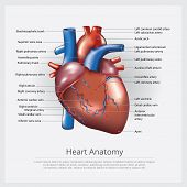 Human Heart Anatomy With Detail Vector Illustration poster