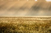 Morning Mist In Field Pastels With Slanted Sunrays poster